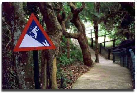 runawaywheelchairhill.jpg